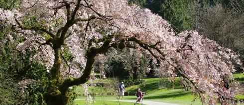 Spring Arboretum Szaba Angela