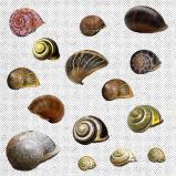 Denim Jungle Snails